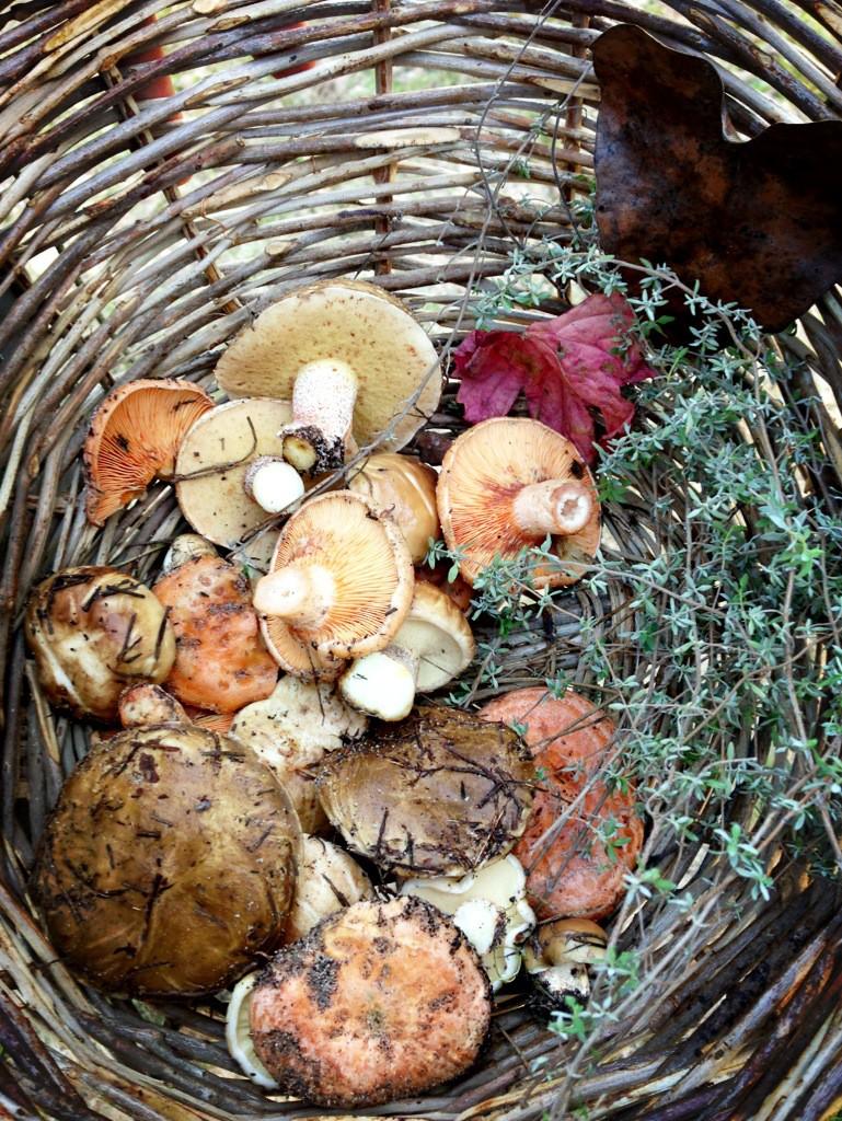 Basket of Wild Mushrooms and Herbs