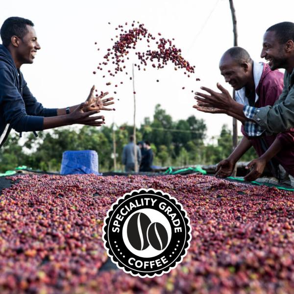 Blue Goose Eco Coffee Speciality Grade Ethiopian Yirgacheffe coffee award winning eco pods and whole bean coffee